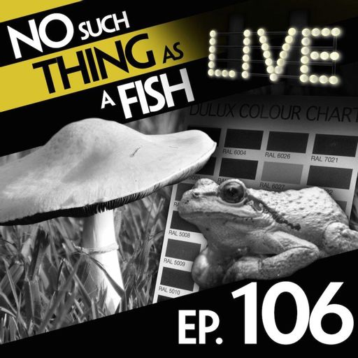 5af823c68 Episode 106  No Such Thing As A Six-Tier Japanese Human Pyramid from No  Such Thing As A Fish on RadioPublic