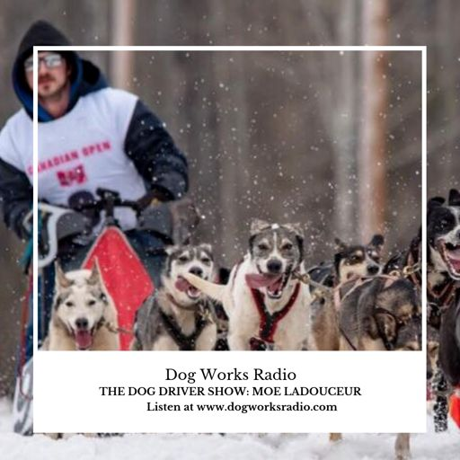 Dog Works Radio: Kim Paciotti from Dog Works Radio on
