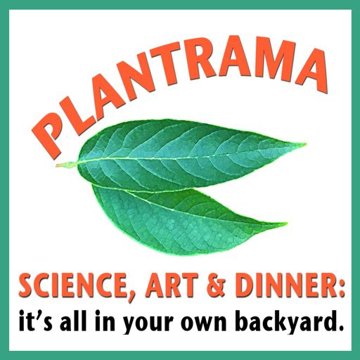 Cover art for podcast Plantrama - plants, landscapes, & bringing nature indoors