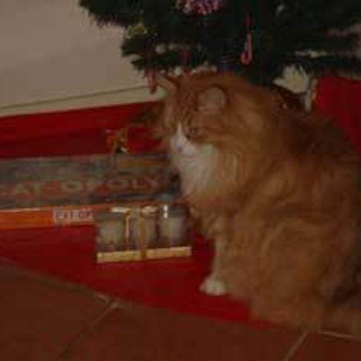 Kitty Cat Cast on RadioPublic