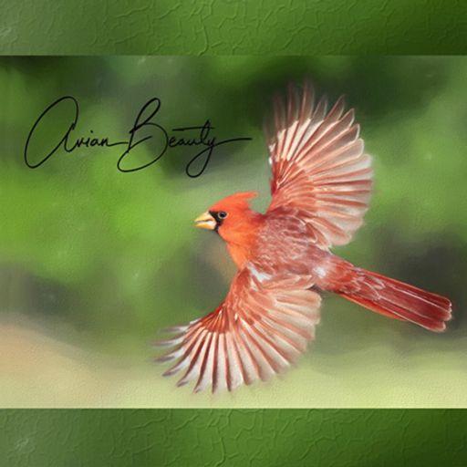 Cover art for podcast Avian Beauty