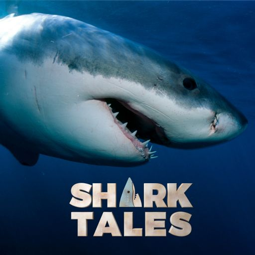 Cover art for podcast Shark Tales