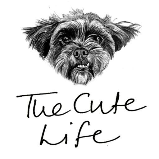 Cover art for podcast The Cute Life