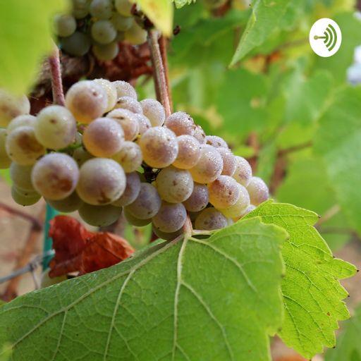 Cover art for podcast Wine by La Petite Nénette