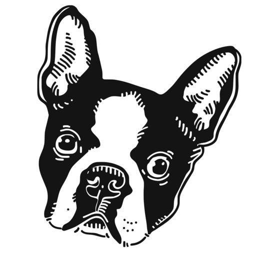 Cover art for podcast The Boston Terrier Society
