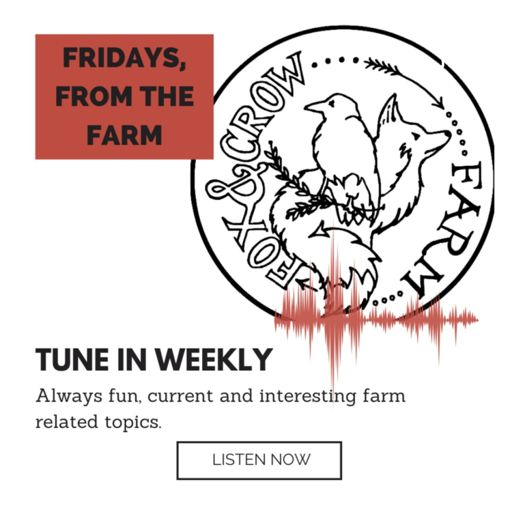 Cover art for podcast Fridays, From the Farm