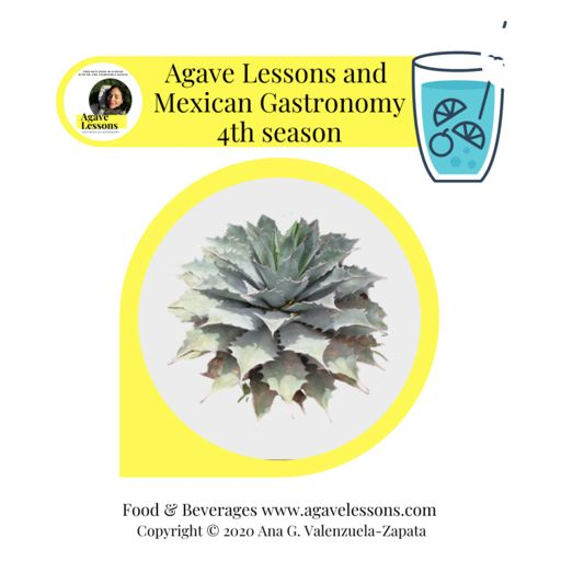 Cover art for podcast Agave lessons and Mexican gastronomy. Copyright © 2020 Ana G. Valenzuela-Zapata