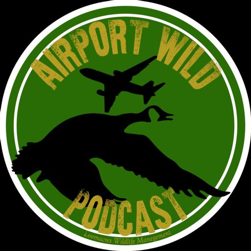 Cover art for podcast Airport Wild!