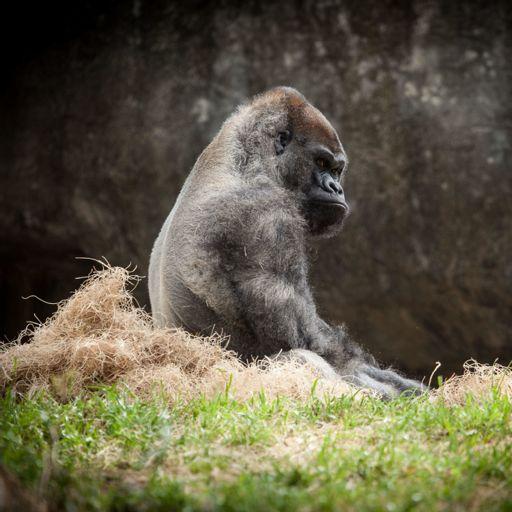 Cover art for podcast Gorilla's Playthrough
