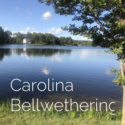 Cover art for podcast Carolina Bellwethering