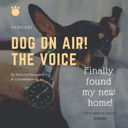 Cover art for podcast Dog On Air