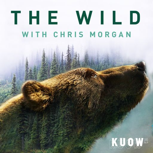 Cover art for podcast The Wild