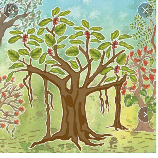 Ekek Zaad Mahatvache (Every Tree Counts) - Marathi Stories for kids