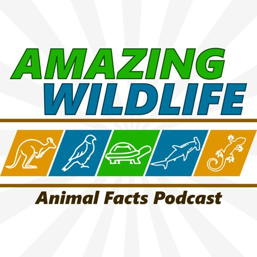 Cover art for podcast Amazing Wildlife
