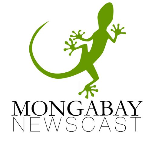 Cover art for podcast Mongabay Newscast