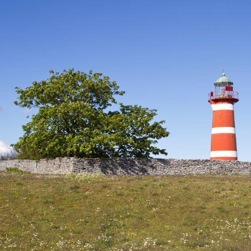 3b27ea896247 Fåglarnas Gotland from Naturmorgon on RadioPublic
