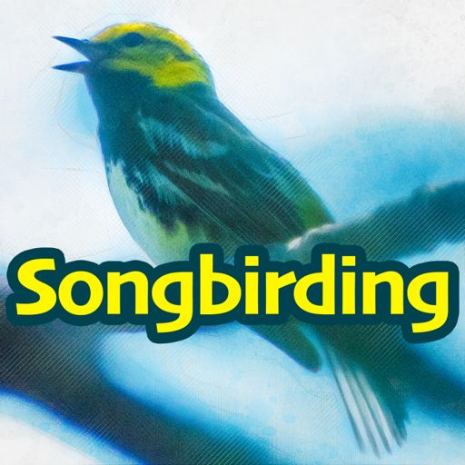 Cover art for podcast Songbirding